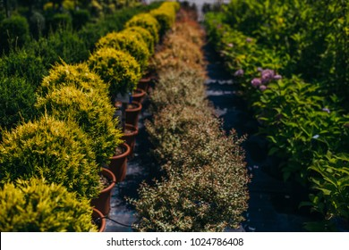 The nursery of plant and trees for gardening