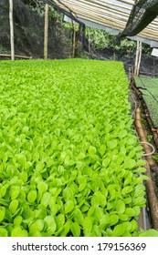 nursery vegetable