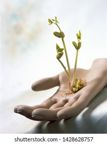 Nurture conceptual image of young bean seedlings sprouting and growing in mannikin caring hand