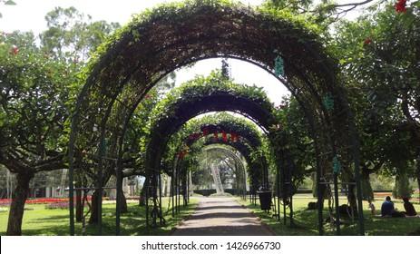 at the nusantara flower garden in cisarua , indonesia. ones of the biggest garden in the world . photo taken june 2019