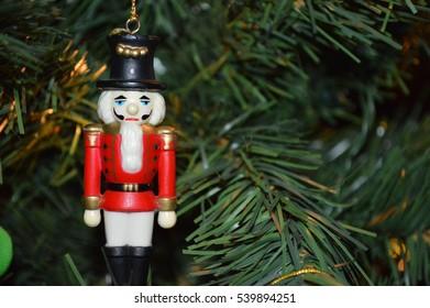 Nut cracker on tree
