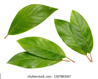 Nut leaves isolated on white background. Collection Clipping Path. Professional studio macro shooting