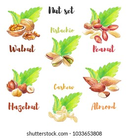 Nut set hand drawn with colored pencil. Different nut types isolated on white background with green mint leaves.
