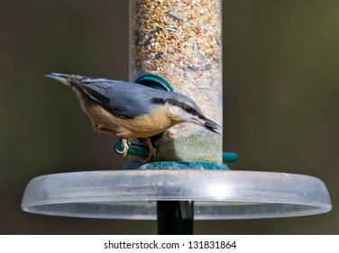 Nuthatch feeding from a bird feeder.