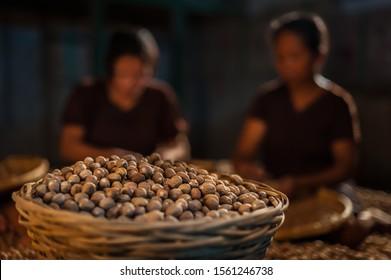 Nutmeg harvested in basket, in warehouse, with dark, soft-focus women sorting behind, Banda, Maluku, Indonesia