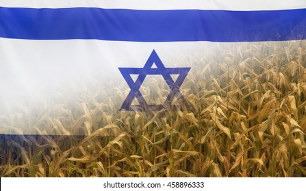 Nutrition food concept corn field in sunny afternoon light merged with fabric flag of Israel