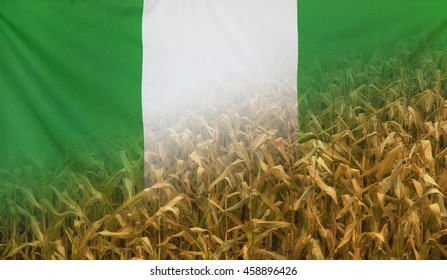 Nutrition food concept corn field in sunny afternoon light merged with fabric flag of Nigeria