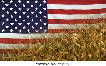 Nutrition food concept corn field in sunny afternoon light merged with fabric flag of USA