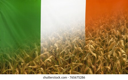 Nutrition food concept corn field in sunny afternoon light merged with fabric flag of Republic of Ireland