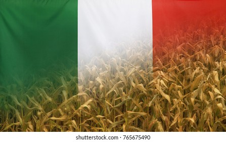 Nutrition food concept corn field in sunny afternoon light merged with fabric flag of Italy