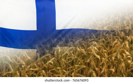 Nutrition food concept corn field in sunny afternoon light merged with fabric flag of Finland