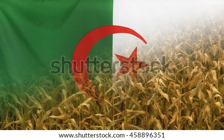 Nutrition food concept corn field in sunny afternoon light merged with fabric flag of Algeria