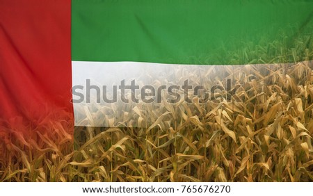 Nutrition food concept corn field in sunny afternoon light merged with fabric flag of UAE