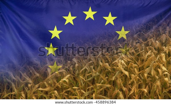Nutrition food concept corn field in sunny afternoon light merged with fabric flag of Europe