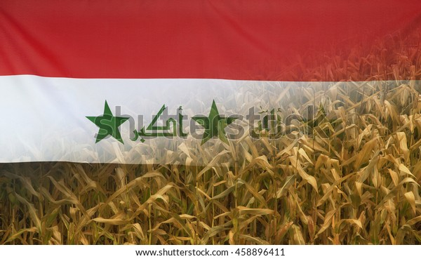 Nutrition food concept corn field in sunny afternoon light merged with fabric flag of Iraq