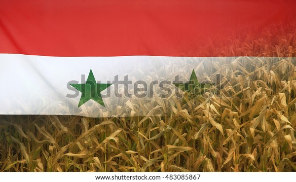 Nutrition food concept corn field in sunny afternoon light merged with fabric flag of Syria