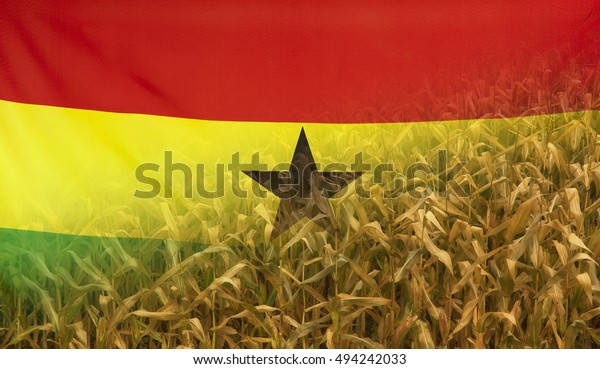 Nutrition food concept corn field in sunny afternoon light merged with fabric flag of Ghana