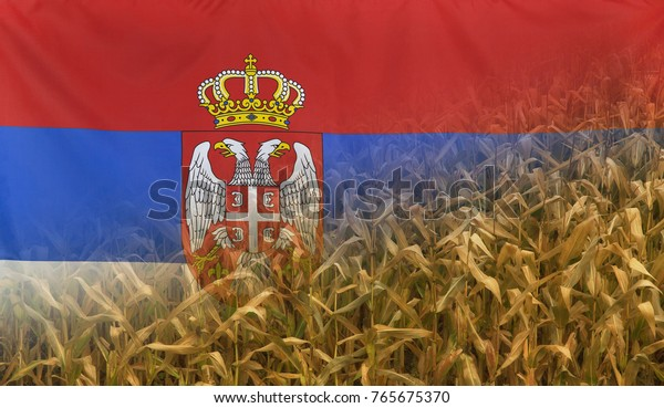 Nutrition food concept corn field in sunny afternoon light merged with fabric flag of Serbia