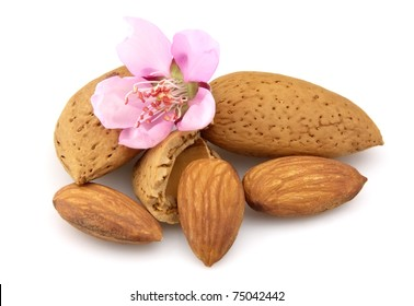 Nuts of almonds and almonds flowers