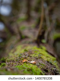 Nutshell on a fallen and decaying tree