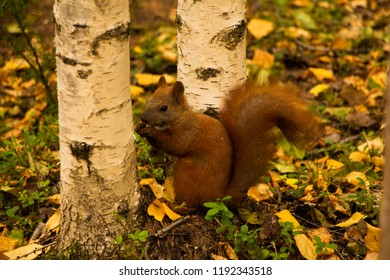 nutty squirrel in the forest