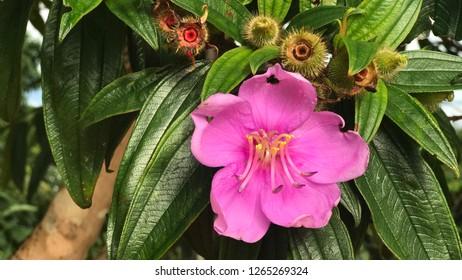 Nutural purple  Wildflowers