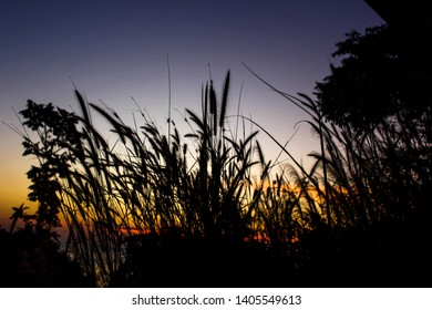 Nuture forest sunset kohphangan thailand