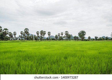 Nuture and green rice field