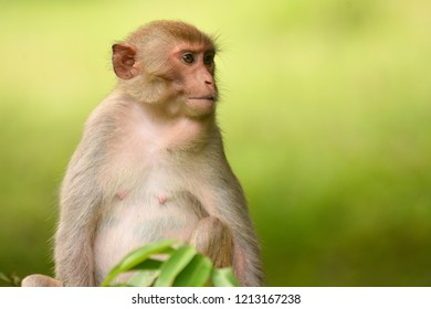 The nuture of monkey