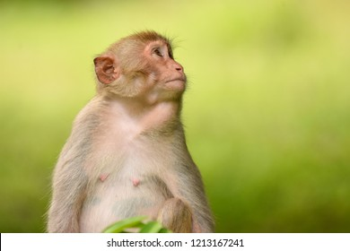 The nuture of monkey looking