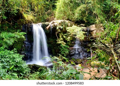 Nuture waterfall forest
