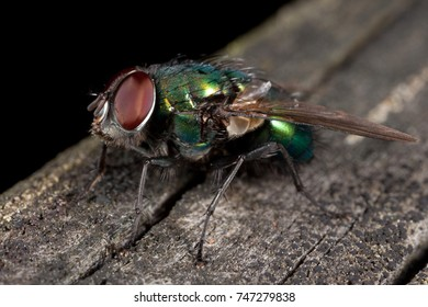 NYKOPING, SWEDEN - OCTOBER 22: Close up of a fly in Nykoping, Sweden, October 22, 2017