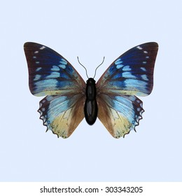 Nymphalidae Butterfly. The Three-dimensional Blue Butterfly of the Nymphalidae Family, scientifically known as Charaxes Smaragdalis. Isolated on Background