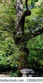 Nymphenburg Palace Nature walk