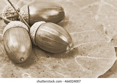 Oak acorns and leaves on the table. Old style sepia.