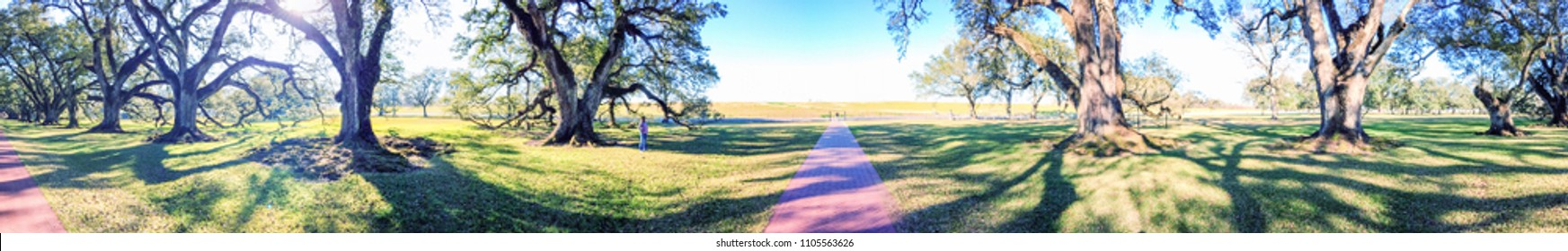 Oak Alley Plantation panoramic view, Louisiana.