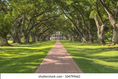 Oak Alley Plantation - Tree Tunnel Leading Up To The Mansion