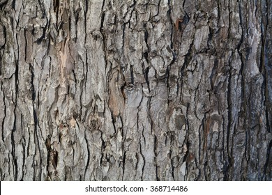 Oak bark. You can use almost any integers. You can create texture. Use the site as a background or your desktop./Gray Oak Bark