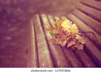 oak branches lie on old wooden bench in park, autumn landscape, retro style