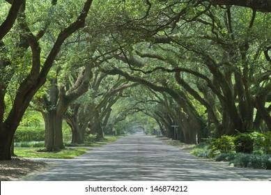 Oak canopied South Boundary Street in Aiken, South Carolina.