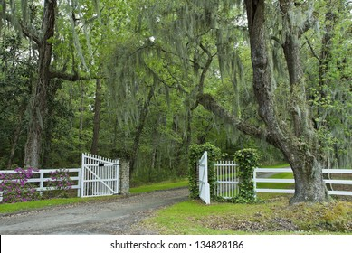 The oak canopy and gated entrance to a southern plantation in the Carolinas.
