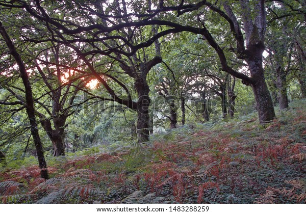 oak-forest-colorful-ferns-during-600w-14
