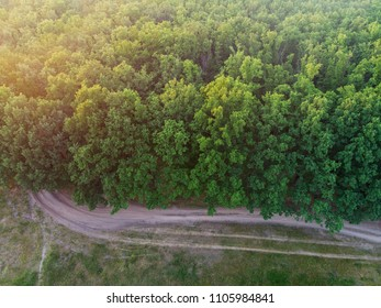 Oak forest and road near it - top view