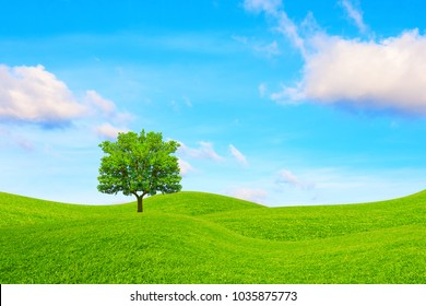 Oak, hills and sky