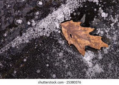 An oak leaf frozen in ice on the surface of a Winter lake.