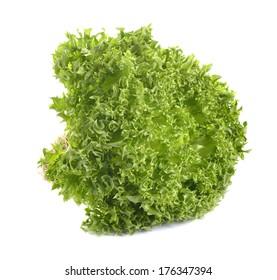 oak leaf lettuce isolate on white