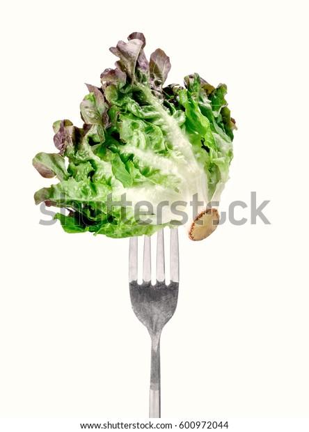 Oak Leaf lettuce on fork isolated on white background