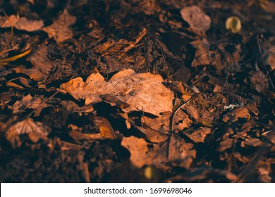An oak leaf on the ground in a garden or forest. Wallpaper. Close-up. The front and back backgrounds are blurred