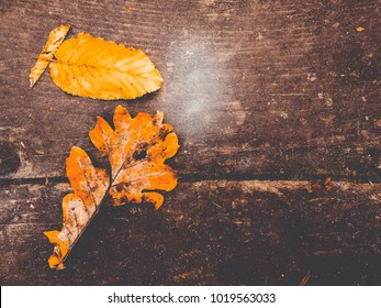 oak leaves on the table