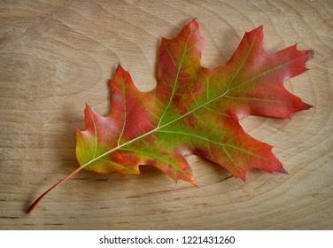 Oak leaves on wood